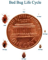Bed Bugs Yuba City Chico Marysville Roseville Grass